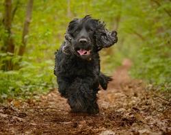 Hundeskov Find Hundeskove Indhegnet Naer Dig 400 Hundeparker